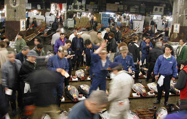 Picture of an auction for large tuna at the Tsukiji Fish Market in Tokyo.